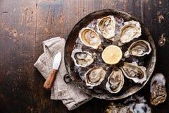 Huîtres ouvertes du plat de cuivre en métal Photo stock