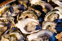 Huîtres pour le BBQ Image stock
