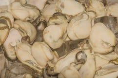 Huîtres sur la glace photographie stock