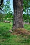 Huśta się pod drzewem w podwórku wieś obraz stock