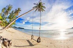Huśtawki i palma na piasek tropikalnej plaży. Fotografia Stock
