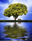 huśtawkowy drzewo Fotografia Royalty Free
