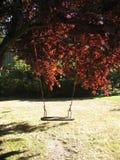 Huśtawkowy obwieszenie od wielkiego drzewa Obraz Stock