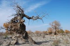 hu tree2 yang стоковые изображения rf