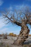 hu tree4 yang Royaltyfri Bild