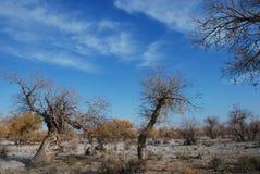 hu tree5 yang стоковая фотография