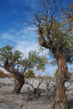 hu tree6 yang стоковые фото