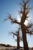 hu tree8 yang стоковое изображение rf