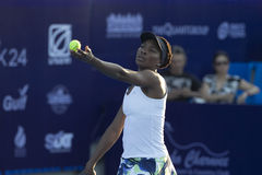 Hua Hin-Jan 1: World No.7 Tennis player Venus Williams of USA in Stock Image