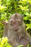 Hua Hin Monkey 11 Stockfotos