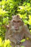 Hua Hin Monkey 10 Lizenzfreie Stockbilder