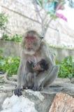 Hua Hin Monkey 12 Stockfotos