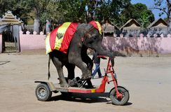 Hua Hin, Tailândia: Motocicleta da equitação do elefante Fotos de Stock Royalty Free