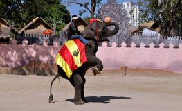 Hua Hin, Tailandia: Ejecución del elefante que juega a baloncesto Imagenes de archivo
