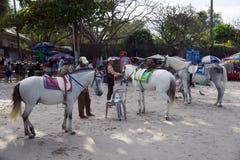 Hua Hin Thailand - Januari 01, 2016: Köpmännen som förbereder deras uthyrnings- hästar för det turist-, rider dem runt om strande Arkivbild