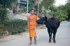 Thai buddhist monk with a cow Stock Images