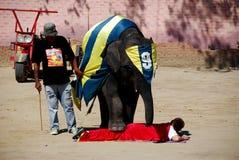 Hua Hin, Thaïlande : Éléphant faisant un pas au-dessus de l'homme Image libre de droits