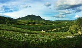 Hua Hin wzgórzy winnicy Zdjęcia Royalty Free
