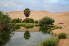 Huacachina, Ica地区,秘鲁绿洲  库存照片
