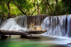 huai kamin kanchanaburi mae泰国瀑布 图库摄影