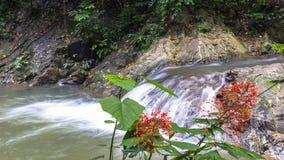 Huai To Waterfall and Flowers. Stock Photo