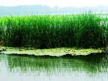 Huaiyang wetland, round city lake, lotus root, natural ecology. Nature lake circles huai yang county a week. zhaofuxin stock image