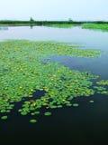 Huaiyang wetland, round city lake, lotus root, natural ecology. Nature lake circles huai yang county a week. zhaofuxin royalty free stock photo