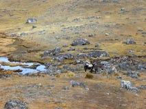 Huancayo imagem de stock