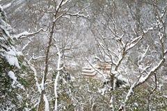 Huanglong, Sichaun, Κίνα στοκ φωτογραφίες