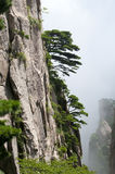 Huangshan,china. The magnificent mountains with trees royalty free stock image