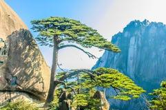 Huangshan drzewa I góry Obrazy Royalty Free