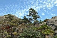 Huangshan gula berg, i det Anhui landskapet i Kina Arkivbilder