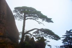 Huangshan mountain mist stock photo