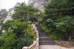 Huangshan mountain stairs path into forest Stock Photos