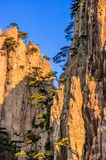 Huangshan Mountains And Trees Stock Images