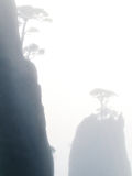 Huangshan pine in a fog. Huangshan mountains in Anhui province in China Royalty Free Stock Photography