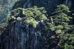 Huangshan sörjer trädet som växer från, vaggar i Huangshan, gula berg, det Anhui landskapet, Kina Arkivbild