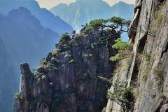 Huangshan sörjer trädet som växer från, vaggar i Huangshan, gula berg, det Anhui landskapet, Kina Fotografering för Bildbyråer