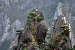 Huangshan sörjer trädet som växer från, vaggar i Huangshan, gula berg, det Anhui landskapet, Kina Royaltyfria Bilder