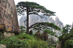 Huangshan Welcoming Pine Royalty Free Stock Photo
