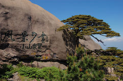 Huangshan welcoming pine Royalty Free Stock Images