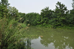 HUANHUAXI PARKï ¼ Œchengdu China Stock Fotografie