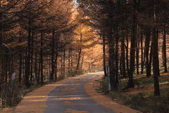 Huapiling在秋天 库存照片