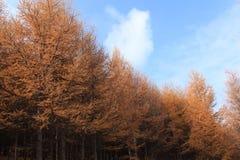 Huapiling在秋天 图库摄影