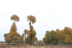 Huapiling в осени Стоковые Фото