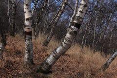 Huapiling in autunno Fotografia Stock Libera da Diritti