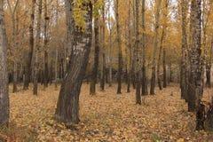 Huapiling in autunno Immagini Stock