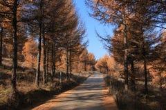 Huapiling i hösten Arkivfoto