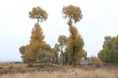 Huapiling i hösten Arkivbild