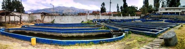Huaraz Peru - September 1, 2010: Kommersiell fisklantgård i Huaraz, Peru Arkivbilder